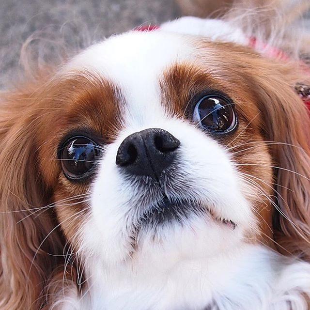 Hvilken slags hundefoder?